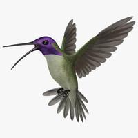 """Calypte Costae """"Costa's Hummingbird"""