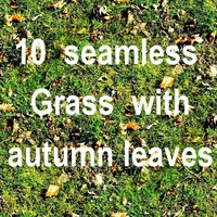 Grass With Autumn Leaves Collection 4