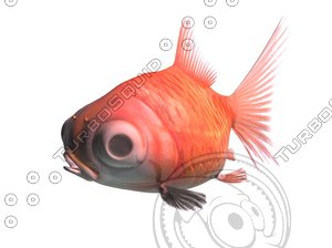 3d fish aquarium