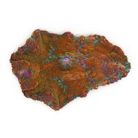 3d rhodactis coral
