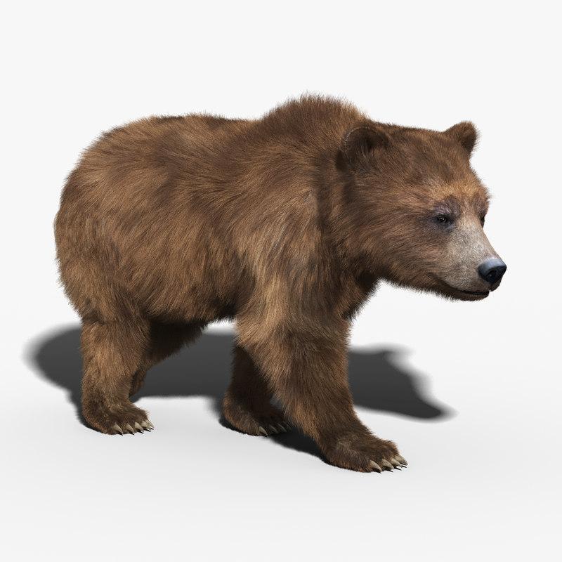 3d brown bear fur rigged model