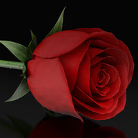 red rose 3d model