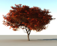 beautiful tree vue 3d c4d