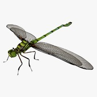 3d dragonfly animation