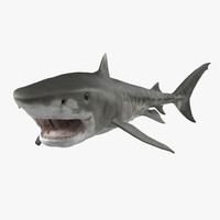 Tiger Shark Swimming 3D Model