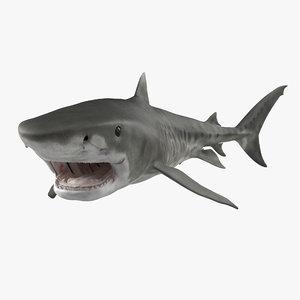 3d model tiger shark swimming modeled