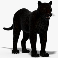 panther black animal 3d model