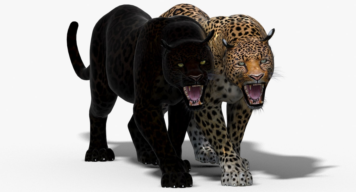 3d panther leopard cat animation