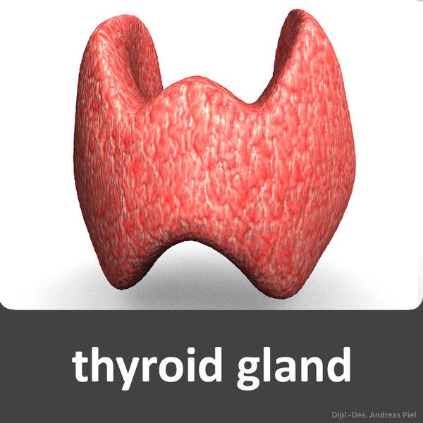 c4d realistic human thyroidal gland