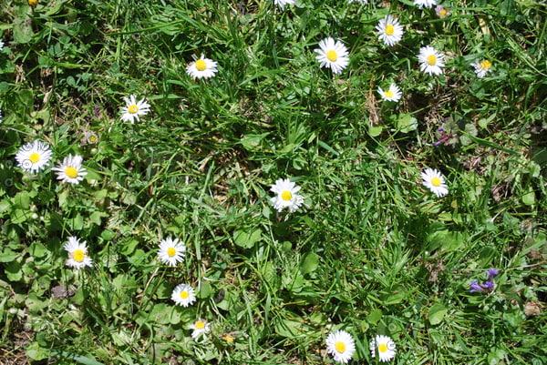 Grass_Texture_0007