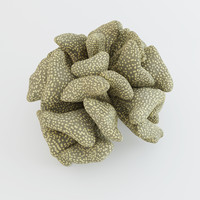 coral polcilopora