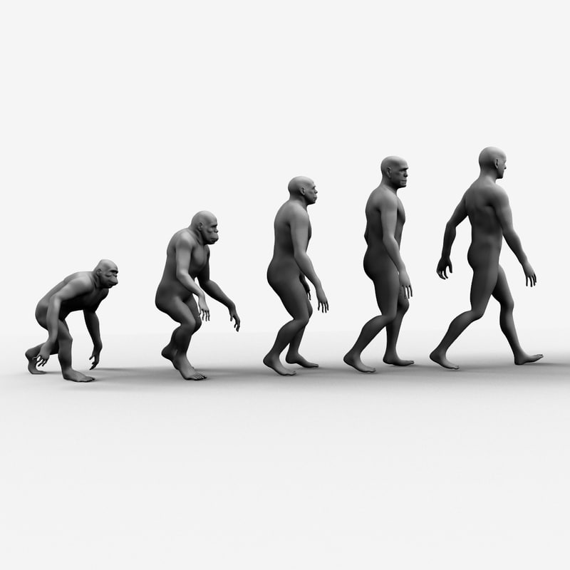 evolution ape 3d obj