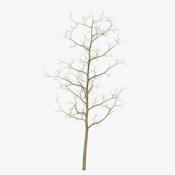 young white oak winter 3d c4d