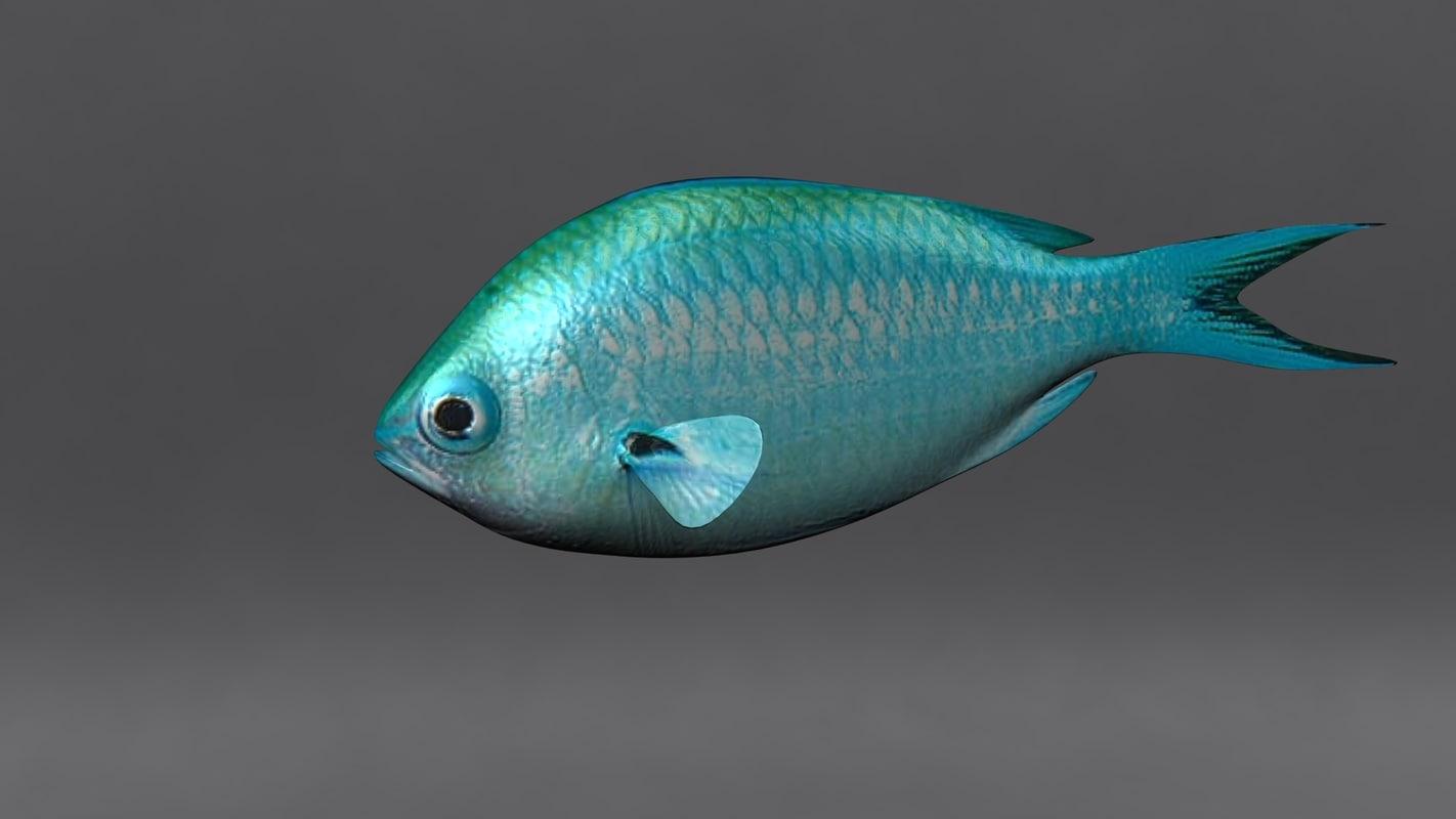 chromis fish 3d ma