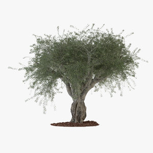 3d model of big olive tree