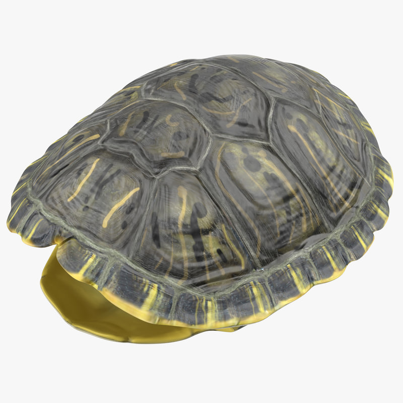 3d turtle shell