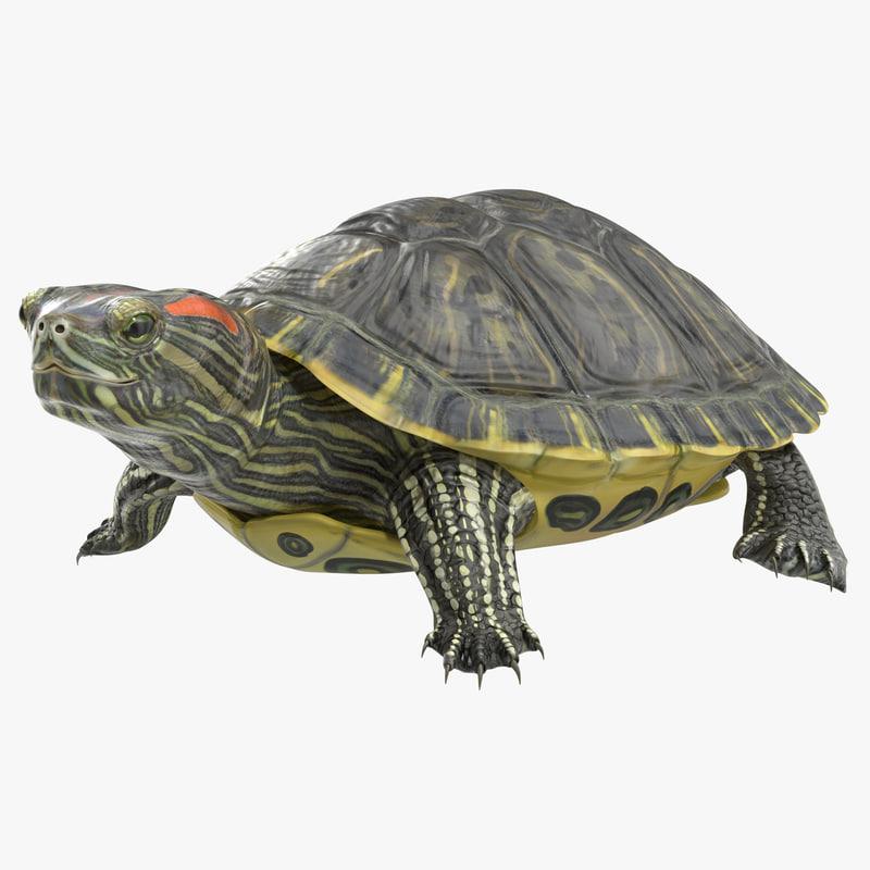 pond slider turtle pose 3d model