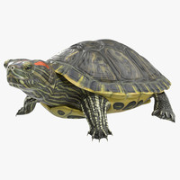 pond slider turtle pose 3d model