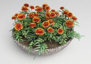 plants flower marigolds 3ds