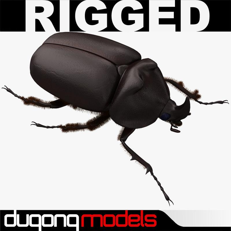 3d model of dugm05 rhinoceros beetle