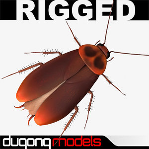 dugm05 cockroach 3d model