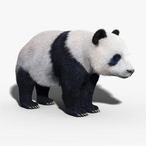 max panda bear fur