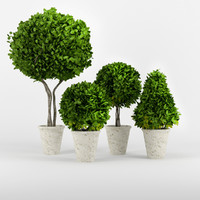 3d model boxwood potted planters
