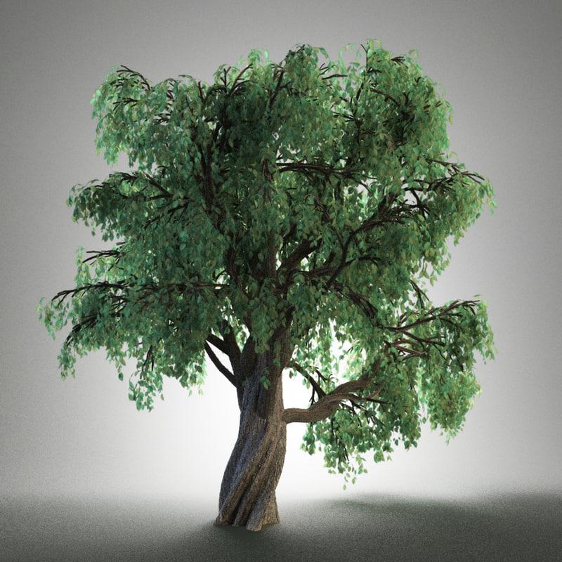 3d old tree model