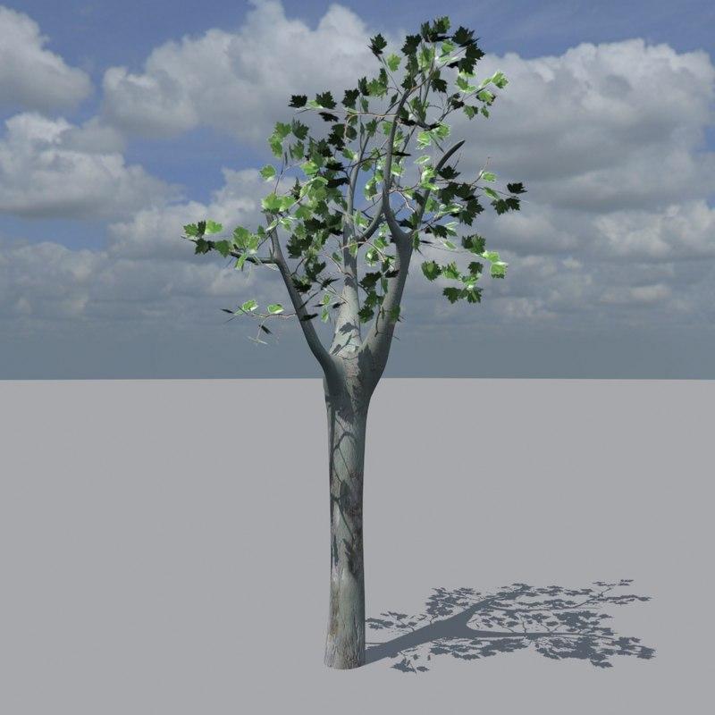 platanus hispanica 3d max