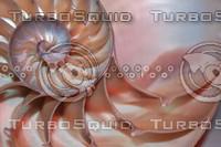 Shell_Texture_0008