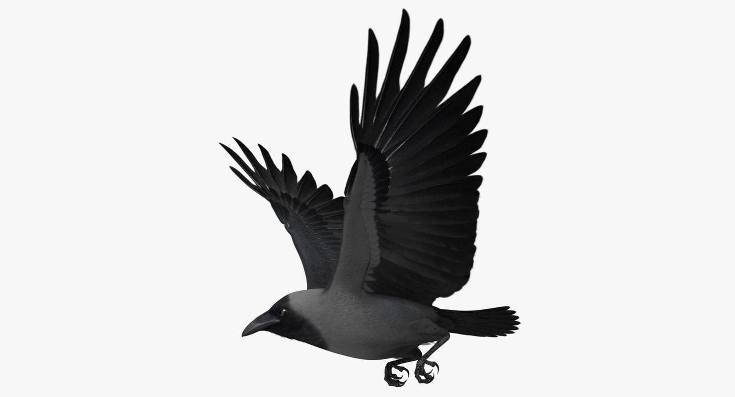 corvus splendens house crow 3d model