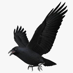 obj corvus cryptoleucus chihuahuan raven