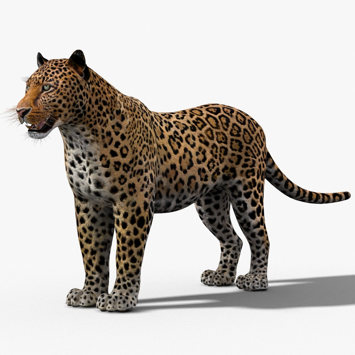3d max jaguar black
