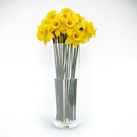 Tubular daffodils