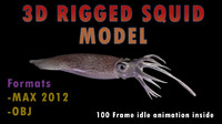 Squid Model 3D Realistic Animated