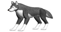 max wolf animal