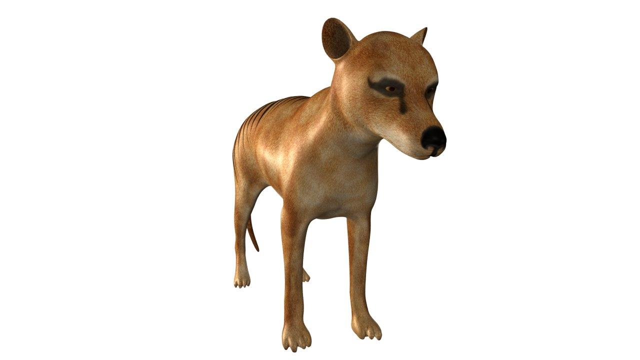 thylacine wolf 3d obj