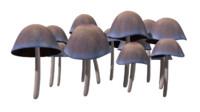 mushroom fungus ground 3d obj