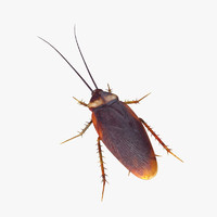 cockroach modeled max