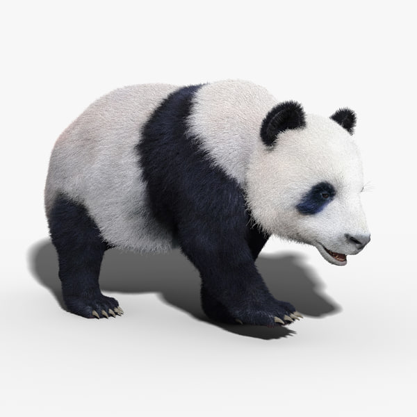 3ds max panda bear fur rigged