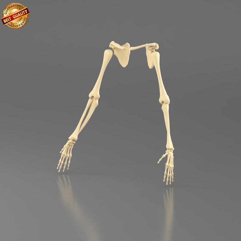 3d anatomy medical