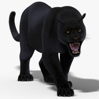 3d model black panther fur cat