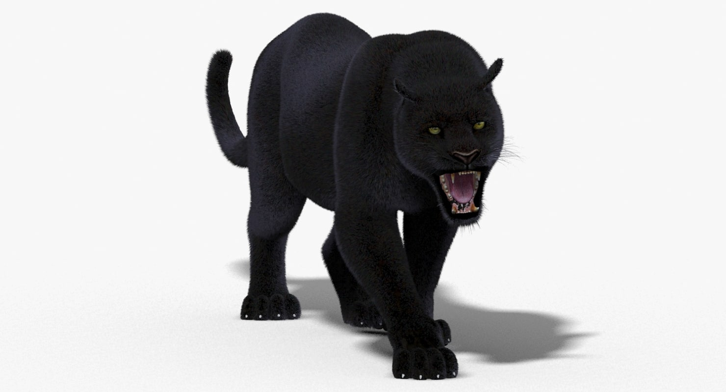 3d model black panther fur cat