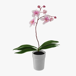 3d model orchid pot modeled