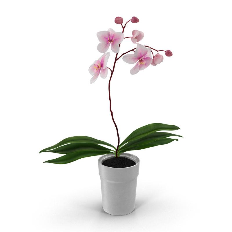 3d model orchid pot modeled