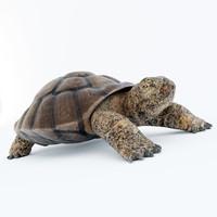 3ds max turtle