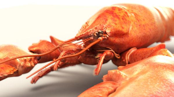 ztl lobster