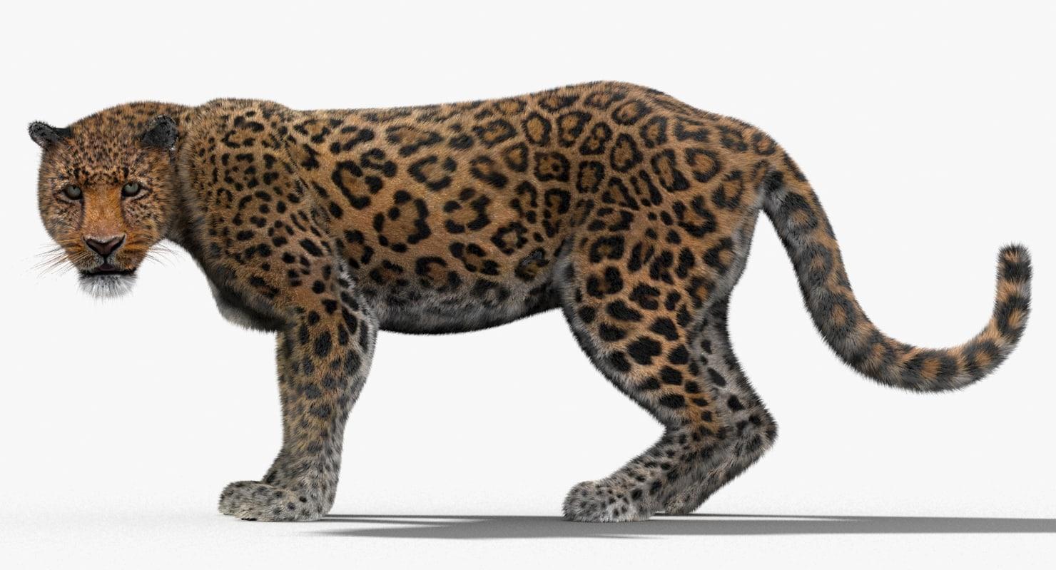 3d leopard fur cat animation model