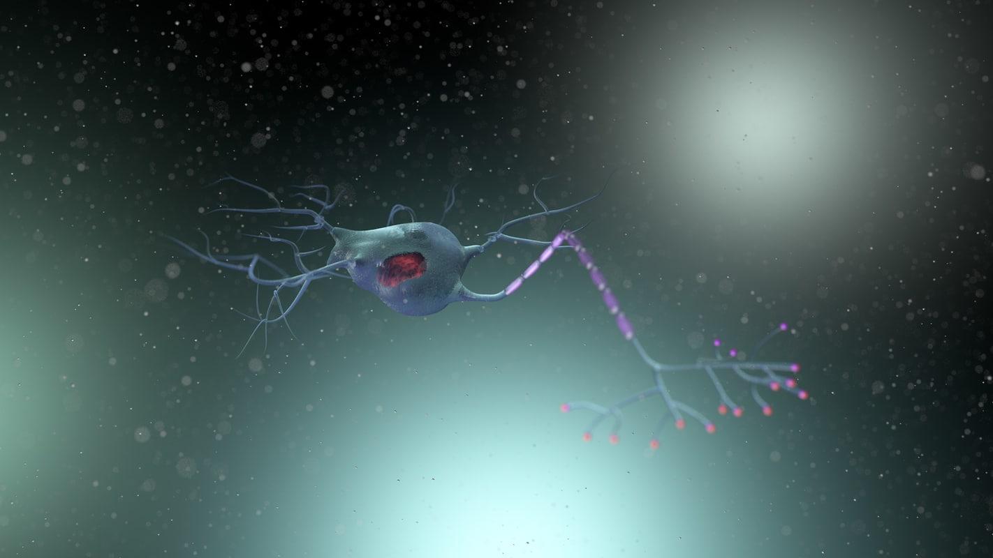 cinema4d neuron dendrites axon