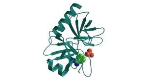 obj trypsin digestive proteins